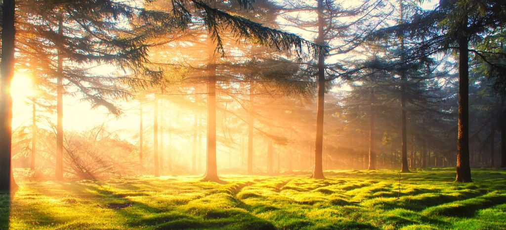 forest-trees-gary-burge-hypnotherapy-plymouth